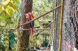 La Guara Roja ave nacional es una de las variedades de aves que alberga el zoológico Rosy Walter.