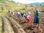 Los agricultores  preparan la tierra con mucho esfuerzo, para luego sembrar sus productos.
