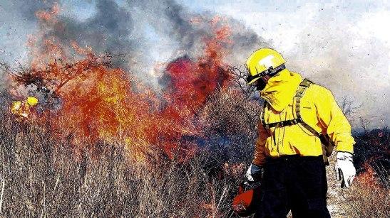Se han dado aproximadamente 331 incendios en zacateras en Tegucigalpa con un área afectada de 47 hectáreas.