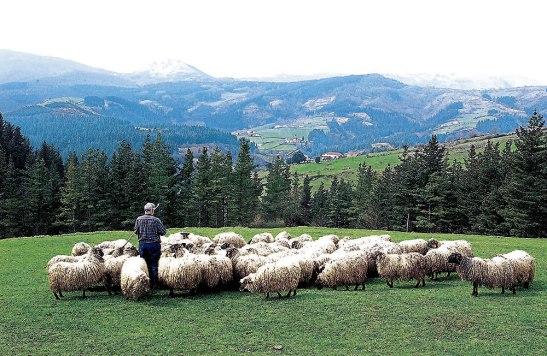 Valdría la pena preguntarnos: ¿Cómo pastoreamos nuestras comunidades? ¿Somos pastores o arrieros? El Pastor va al frente y guía con amor a su comunidad.