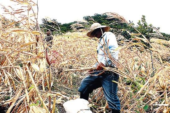 Crece la preocupación por la sequía en algunos departamentos de honduras.