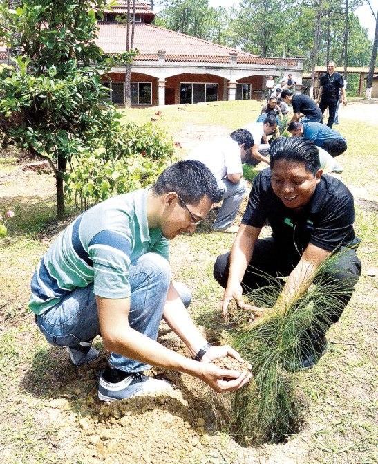 La actividad consistió en plantar uno pinos, cerca de los lugares donde han tenido que talar algunos árboles que se cortaron debido alaplaga del gorgojo.