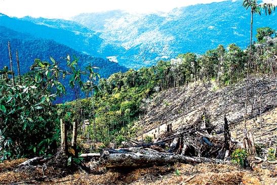 La postura del gobierno para solucionar el problema de la destrucción del gorgojo en el pino hondureño se dará si hay voluntad política.